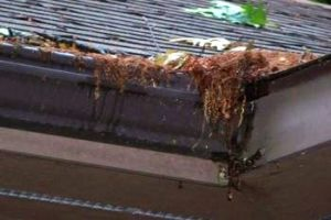 Best Clog Free Gutters