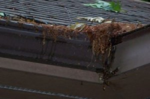 clogged gutters can cause foundation damage